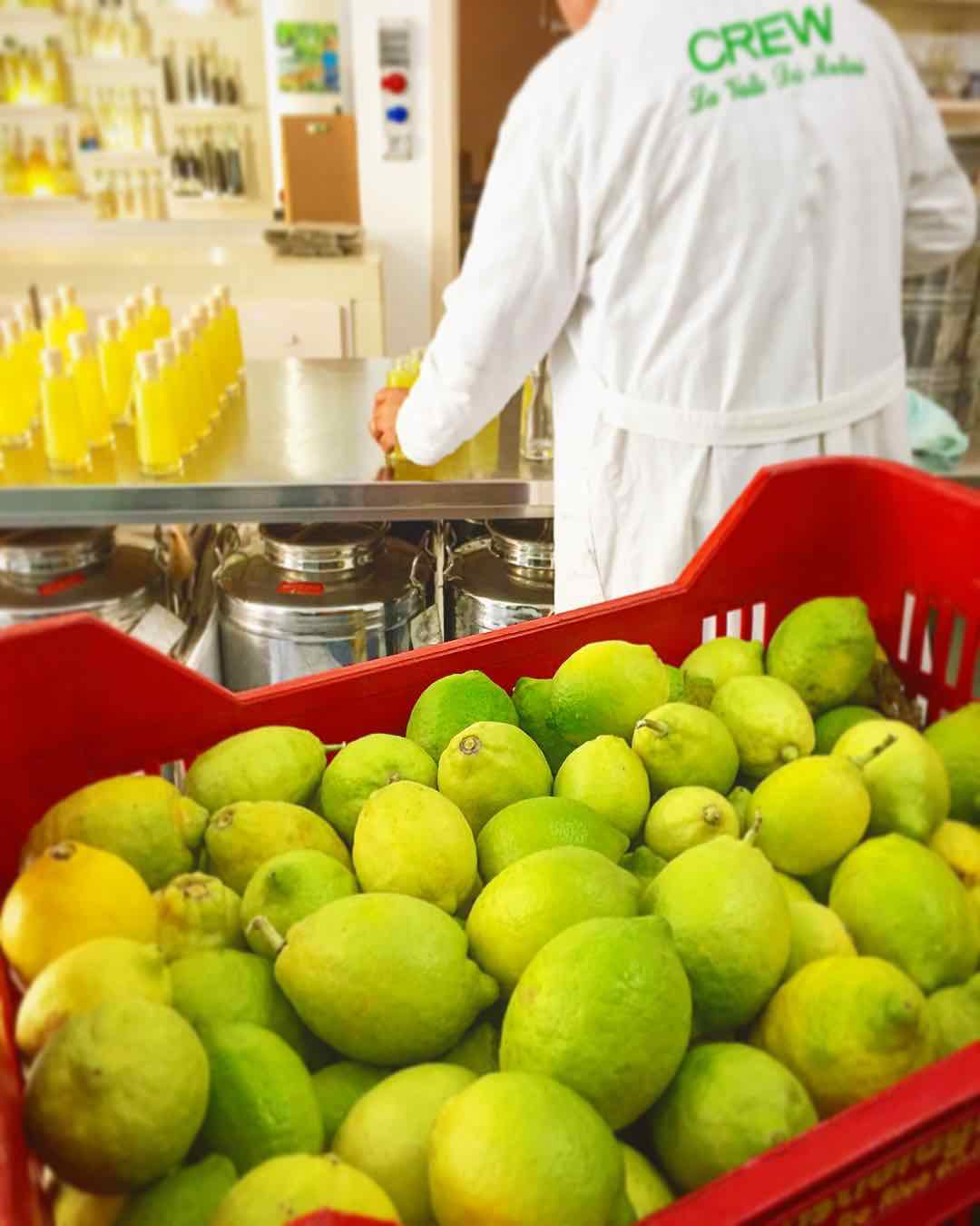 Producing Limoncello bottles, Amalfi Lemon Tour - Living Amalfi