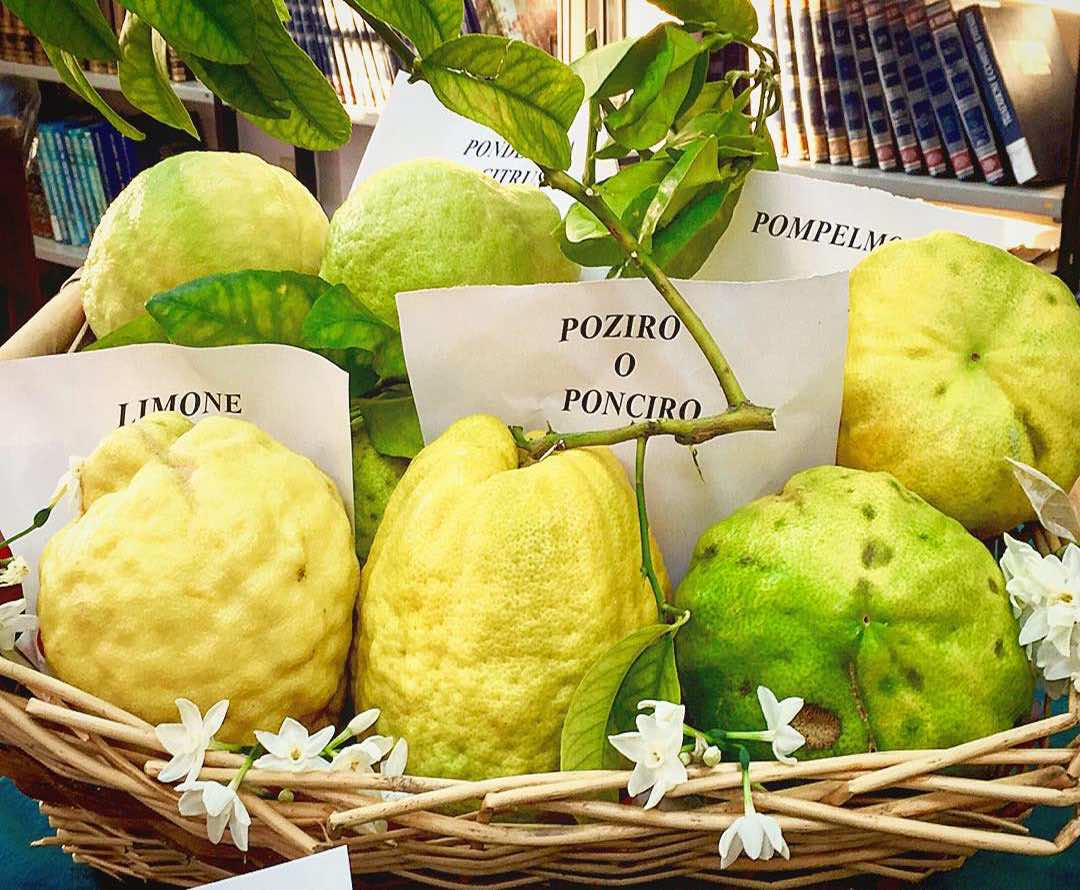 Lemons, Amalfi Lemon Tour - Living Amalfi